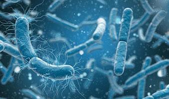 باکتری ها گرم مثبت و منفی و طریقه رنگ آمیزی آنها