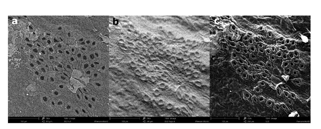تصویر برداری در آنالیز SEM با استفاده الکترون های ثانویه